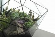 Фото 45 Флорариум своими руками: пошаговый мастер-класс по созданию потрясающего мини-сада за стеклом