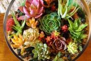 Фото 1 Флорариум своими руками: пошаговый мастер-класс по созданию потрясающего мини-сада за стеклом