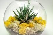 Фото 54 Флорариум своими руками: пошаговый мастер-класс по созданию потрясающего мини-сада за стеклом