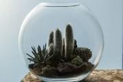 Фото 55 Флорариум своими руками: пошаговый мастер-класс по созданию потрясающего мини-сада за стеклом