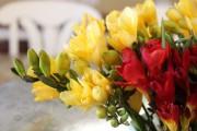 Фото 10 Фрезия (65 фото) — аристократка в вашем саду: посадка, уход, размножение