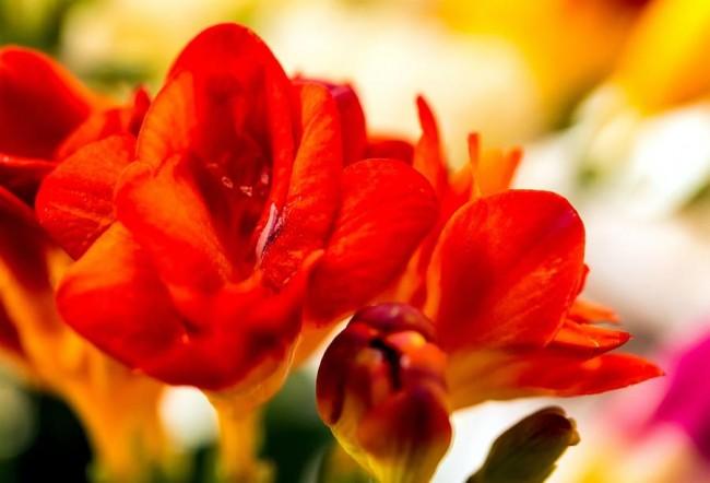 Потрясающе красивый яркий цветок