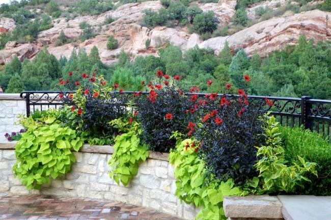 Цветочный бордюр из гергин