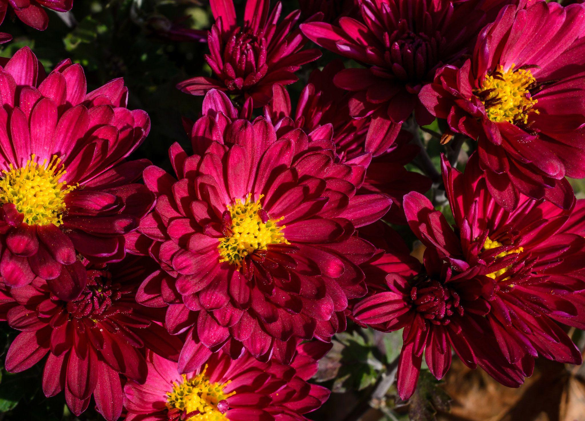 фото шахтеру дарят цветы