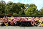 Фото 48 Хризантема садовая многолетняя: посадка и уход (77 фото)