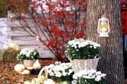 Фото 56 Хризантема садовая многолетняя: посадка и уход (77 фото)
