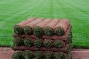 Фото 16 Как укладывать рулонный газон (44 фото): технология и описание процесса пошагово