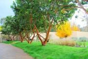 Фото 2 Как укладывать рулонный газон (44 фото): технология и описание процесса пошагово