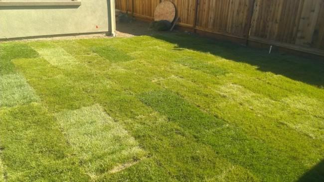 Свежеуложенный рулонный газон