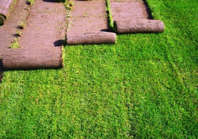 Подготовка рулонного газона
