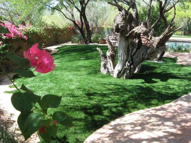 При небольшом уходе газон будет постоянно радовать своим видом
