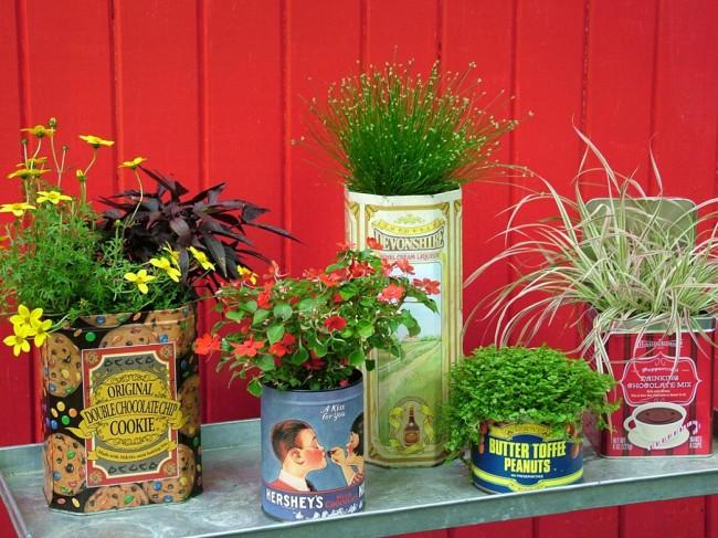 Разнообразные жестяные банки - самый простой вариант вазона для растений