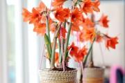 Фото 26 Кашпо для цветов своими руками (60+ фотоидей и мастер-классы): украшаем дом и сад стильно!