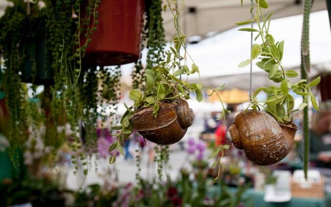 В качестве кашпо для небольших растений можно использовать ракушки