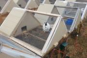 Фото 28 Клетки для кроликов своими руками (48 фото): как создать комфорт ушастым питомцам