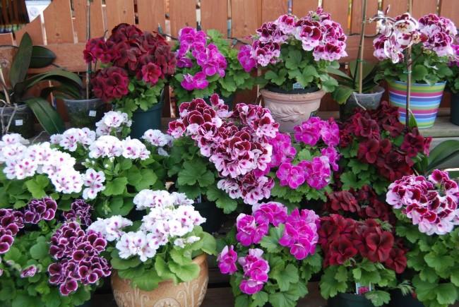 Цветущий уголок из домашних растений