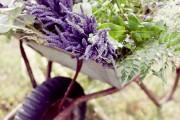 Фото 20 Лаванда (52 фото): посадка и уход за своенравным и красивым растением
