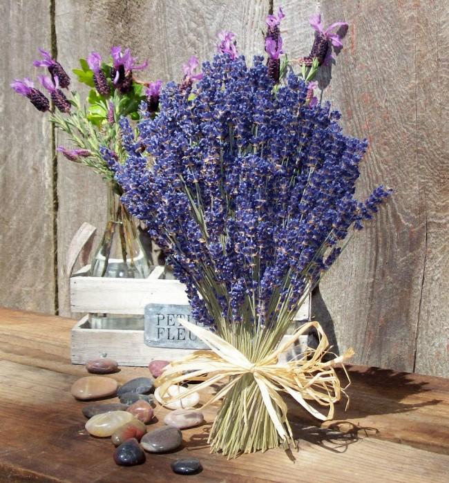 Невозможно забыть удивительный аромат этого растения