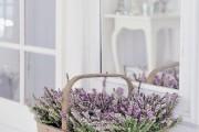 Фото 26 Лаванда (52 фото): посадка и уход за своенравным и красивым растением
