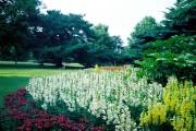 Фото 7 Львиный зев (50 фото): способы размножения, посадка и уход за растением