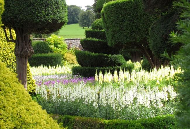 Множество белых антирринумов создает атмосферу праздника в саду