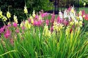 Фото 28 Львиный зев (50 фото): способы размножения, посадка и уход за растением