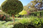 Фото 25 Цветок мирт (53 фото) выращивание и уход в домашних условиях
