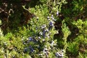 Фото 10 Хвойный красавец в саду — можжевельник (60 фото): посадка и уход за растением