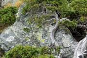 Фото 14 Хвойный красавец в саду — можжевельник (60 фото): посадка и уход за растением