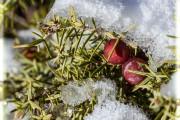 Фото 21 Хвойный красавец в саду — можжевельник (60 фото): посадка и уход за растением