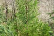 Фото 26 Хвойный красавец в саду — можжевельник (60 фото): посадка и уход за растением