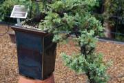 Фото 28 Хвойный красавец в саду — можжевельник (60 фото): посадка и уход за растением