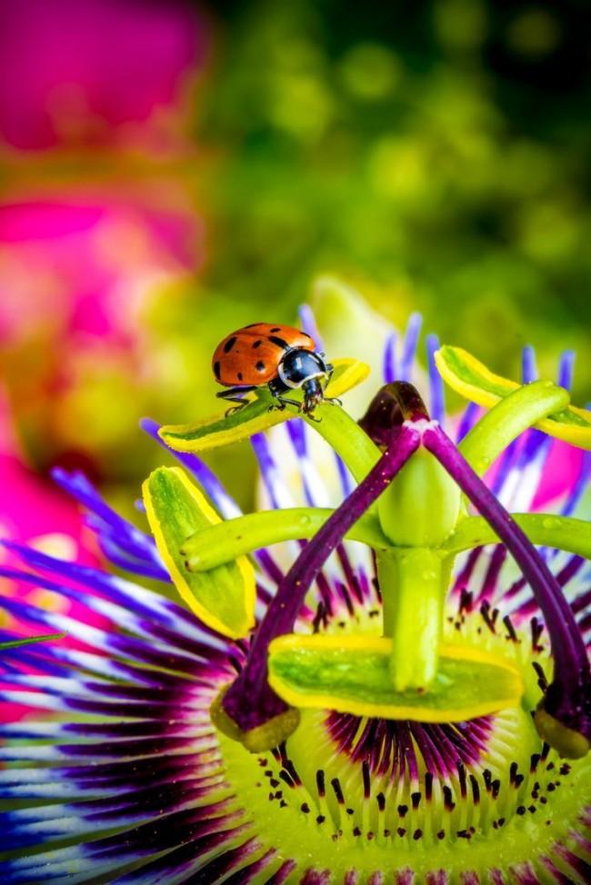 Экзотический цветок привлекает букашек своим чарующим ароматом
