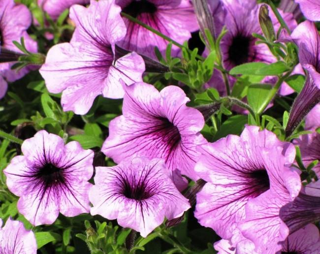 Регулярная обработка цветка специальными веществами обезопасит ваше растение от возможных неприятностей