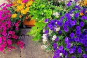 Фото 20 Петуния: посадка и уход (70 фото) — раскрываем тайны красивого цветка