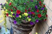 Фото 23 Петуния: посадка и уход (70 фото) — раскрываем тайны красивого цветка