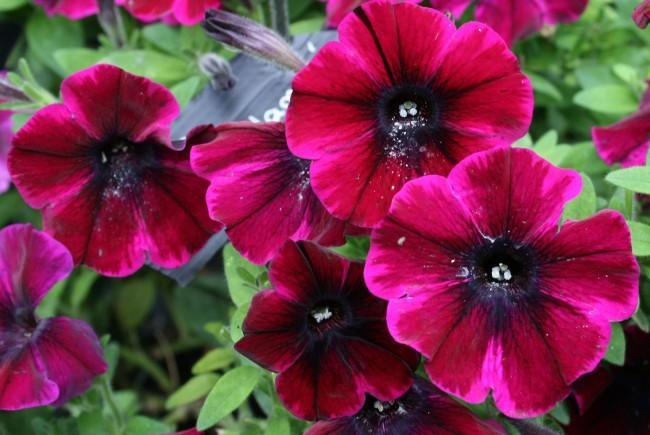 Если вовремя принять меры, можно спасти растение от опасных для него заболеваний