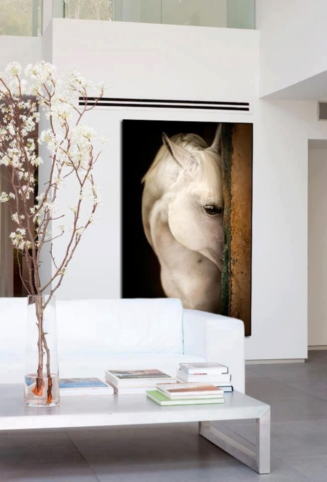 Постер с выглядывающей лошадью