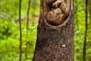 Фото 23 Резьба по дереву: вдохновляющие идеи, эскизы и советы по выбору материала