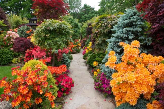Сказочно красивый сад с рододендроном