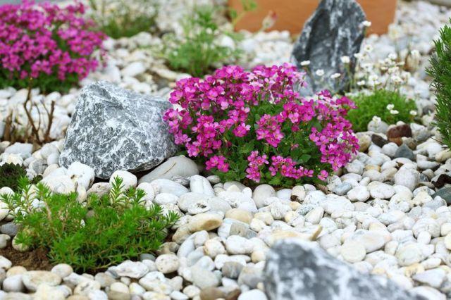 Хорошо расположенные растения и камни придадут композиции большей натуральности