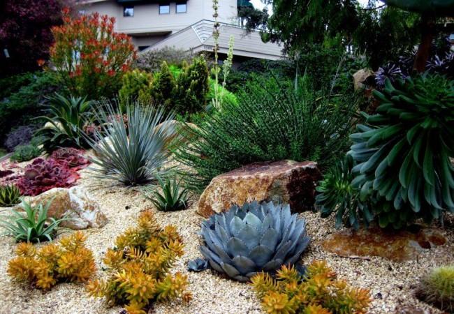 Рокарий с преобладающими растениями - суккулентами