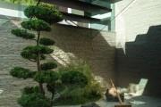 Фото 15 Рокарий (48 фото): растительно-каменный тандем на плоской поверхности