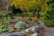 Фото 16 Рокарий (48 фото): растительно-каменный тандем на плоской поверхности