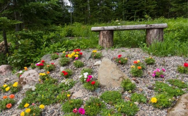 Низкорослые яркие цветы в небольшом рокарии
