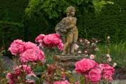 Фото 55 Роза флорибунда (100 фото): сорта, названия, посадка, уход, размножение