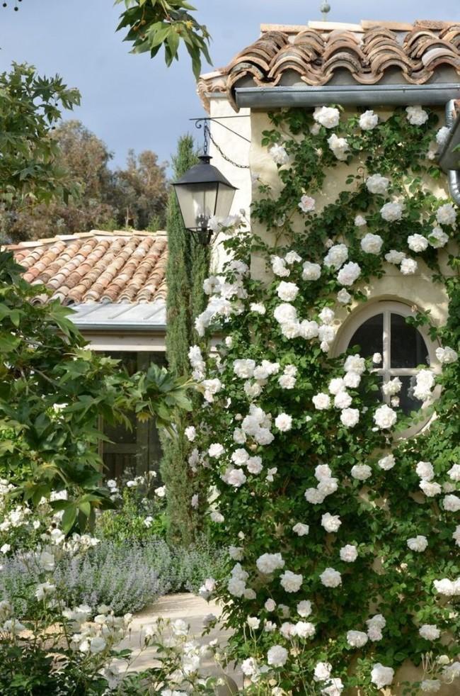 Стена дома, увитая цветками флорибунды