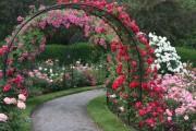 Фото 47 Роза флорибунда (100 фото): сорта, названия, посадка, уход, размножение