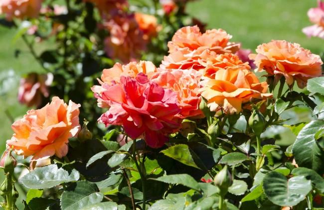 Не забывайте вовремя обрабатывать растения препаратами от вредителей