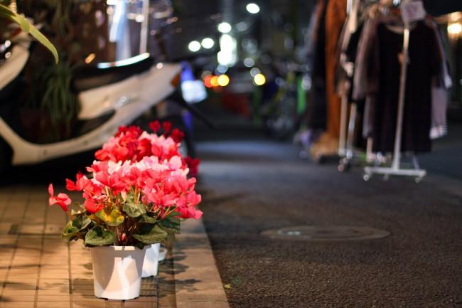 Цикламены в горшках служат отличным уличным украшением улицы
